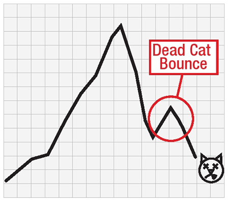 down-kitty-down