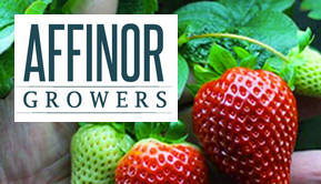 Update: Affinor Growers $RSSFF $AFI (CSE) Now have DTC Approval, Improves Liquidity and Standing