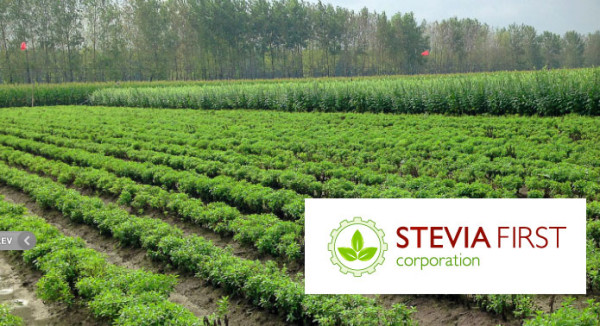 Breaking News on Stevia First Corp ($STVF)