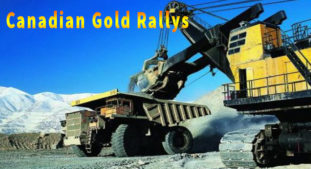 Canadian Gold Stocks Rally